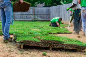 Residential Landscaping services Sunshine coast
